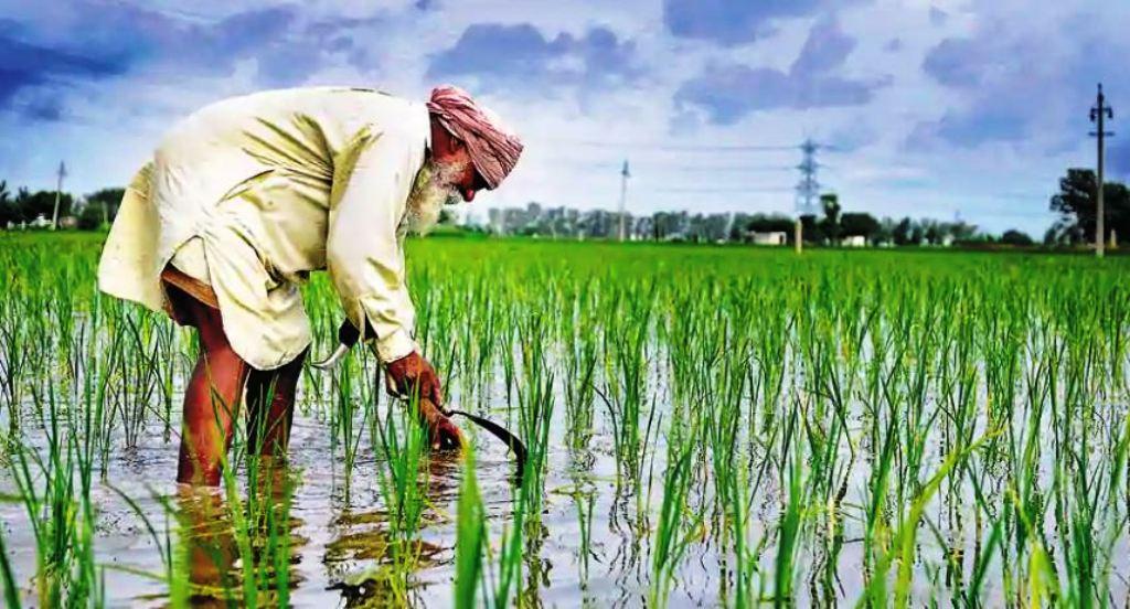 1.5 lakh ranchers from Maharashtra, Gujarat utilizing Cotton Doctor application